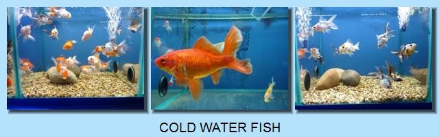 Lynwood aquatics surrey aquatic store for Fish and aquarium stores